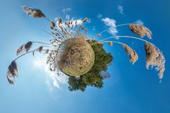 Little planet transformation with curvature of space. Spherical aerial 360 view panorama on the shore of lake with thickets of. Reeds in sunny summer royalty free stock photo