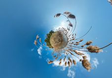 Little planet transformation with curvature of space. Spherical aerial 360 view panorama on the shore of lake with thickets of. Reeds in sunny summer royalty free stock image