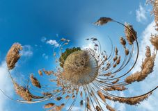 Little planet transformation with curvature of space. Spherical aerial 360 view panorama on the shore of lake with thickets of. Reeds in sunny summer stock image