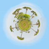 Little planet with trees Stock Photography