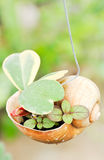 Little plant Stock Image
