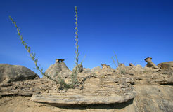 Little Plant in the Badlands Stock Images