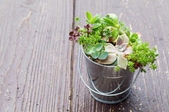 Little plant in a bucket Royalty Free Stock Photography