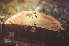 Little plant on the cutted tree Stock Photos