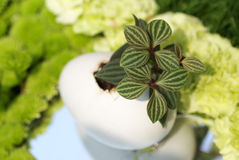 Little Plant in Egg Shell Stock Photography