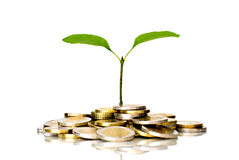 Little plant and euro coins Stock Images
