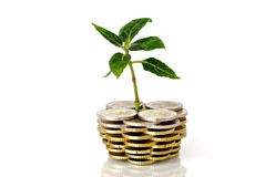Little plant and euro coins Royalty Free Stock Images