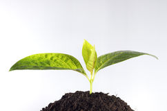 Little plant grow from earth Royalty Free Stock Photo