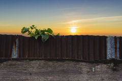 Little plant grow on rust metal sheet Stock Photos