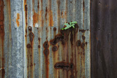 Little plant grow on rust metal sheet Stock Photo