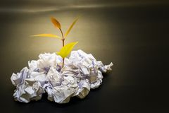 Little plant grow up on Crumpled paper Stock Images