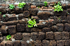 Little plant grow on volcanic pumice stone wall Stock Image