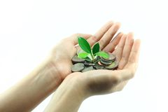 Little Plant Growing From Pile Of Coins On Hand Royalty Free Stock Photography
