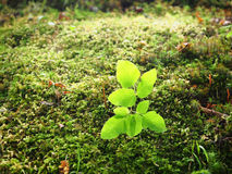 A little plant growing in the green humid forest. On the grass background Stock Photography
