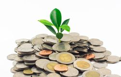 Little plant growing from pile of coins Stock Image