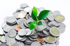 Little plant growing from pile of coins Stock Photos