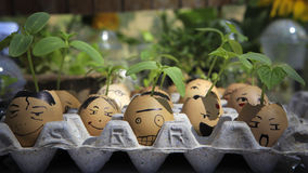 A little plant grows in an egg Stock Images