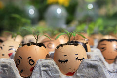 A little plant grows in an egg Stock Photography
