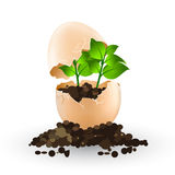 A little plant grows in an egg Royalty Free Stock Photo