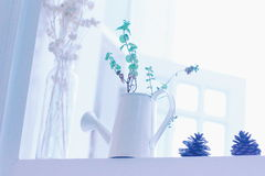 Little plant Stock Photos