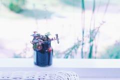 Little plant in a little glass jar Stock Photo