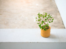 Little plant in orange earthenware pot on concrete floor. Space for text and design Stock Images