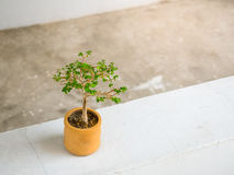 Little plant in orange earthenware pot on concrete floor. Space for text and design Royalty Free Stock Image