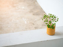 Little plant in orange earthenware pot on concrete floor. Space for text and design Royalty Free Stock Photography