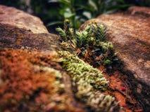 Little Plant stock photo