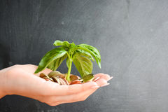 Little plant sprouting from pile of coins Stock Photography