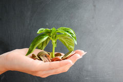 Little plant sprouting from pile of coins Royalty Free Stock Photo