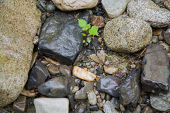 Little plant among stones Royalty Free Stock Photography