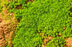 Little plant in sunlight. Vivid green plants on the earth cliff Royalty Free Stock Images
