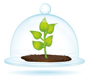 Little plant under a glass bell. Royalty Free Stock Photos