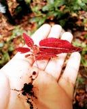 little planterar Arkivbild