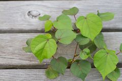 Little planterar Royaltyfria Bilder
