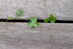 Little planterar Royaltyfri Foto
