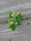 little planterar Royaltyfri Fotografi