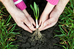 little planterar att plantera Royaltyfri Fotografi