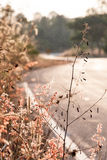Little plants along the sideway. Tiny flowers along the sideway in pink tone Stock Photos