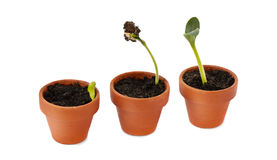 Little plants in pot Stock Photo