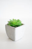 Little plants Royalty Free Stock Image