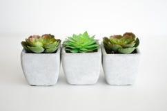 Little plants. Set of 3 little desktop plants Royalty Free Stock Images