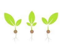 Little plants vector Stock Photos