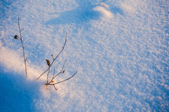 Little plants in winter field. 