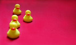 Little plastic ducks. Standing out of the crowd Royalty Free Stock Photos