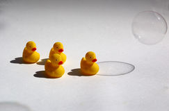 Little plastic ducks Stock Photo