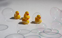 Little plastic ducks Stock Photography