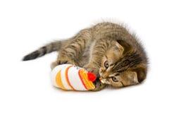 Little playful kitten Royalty Free Stock Images