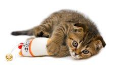 Little playful kitten Royalty Free Stock Photos